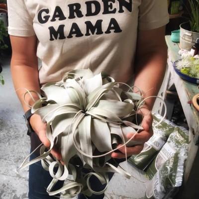 nursery crawl 2018 garden mom