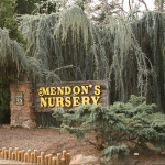 Mendon's Nursery