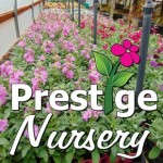 Prestige Nursery